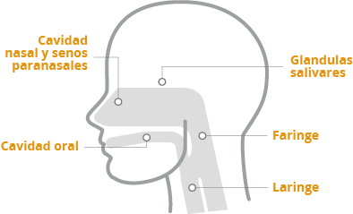 cáncer de cabeza y cuello (CCC)  distintas localizaciones